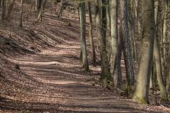 Wald am Burgberg