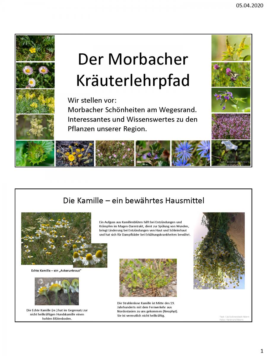 Beispiele-Schautafeln-Morbacher-Kräuterlehrpfad_Seite_1