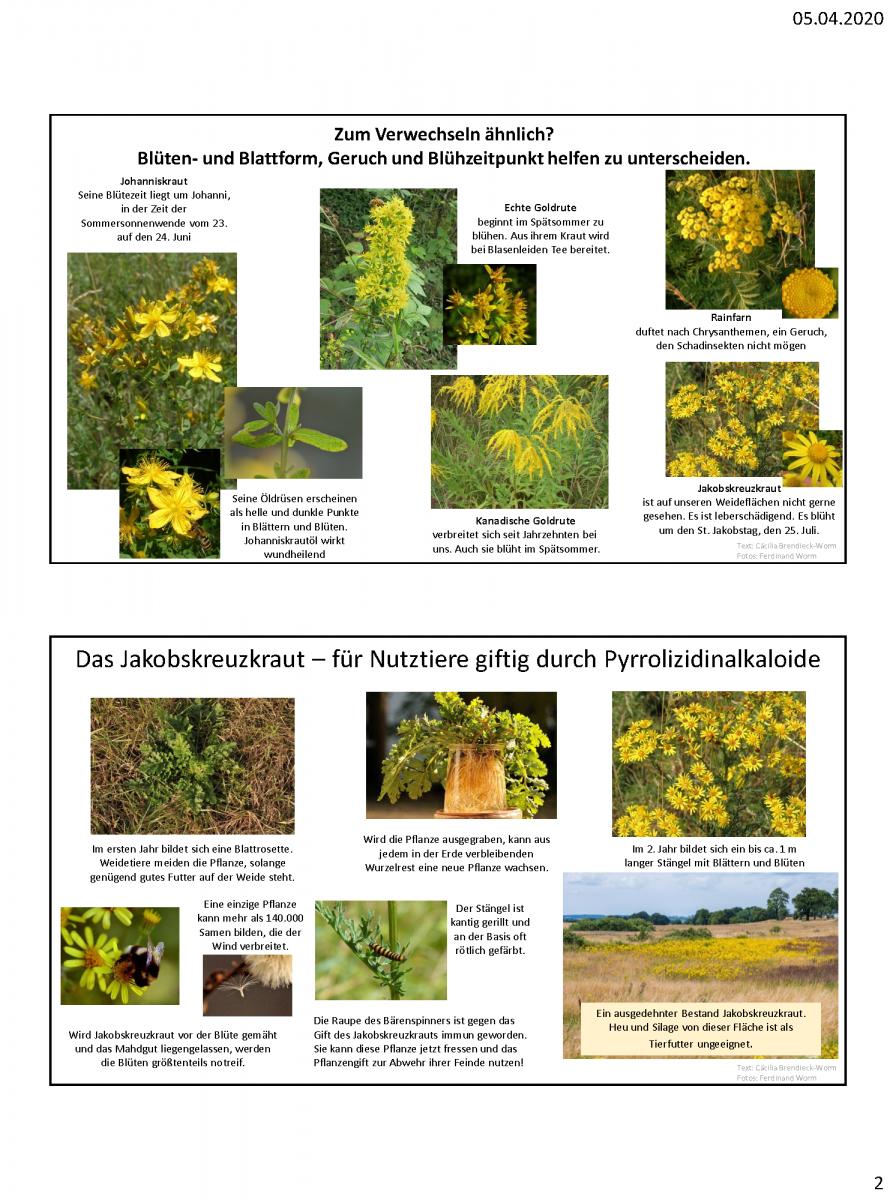 Beispiele-Schautafeln-Morbacher-Kräuterlehrpfad_Seite_2