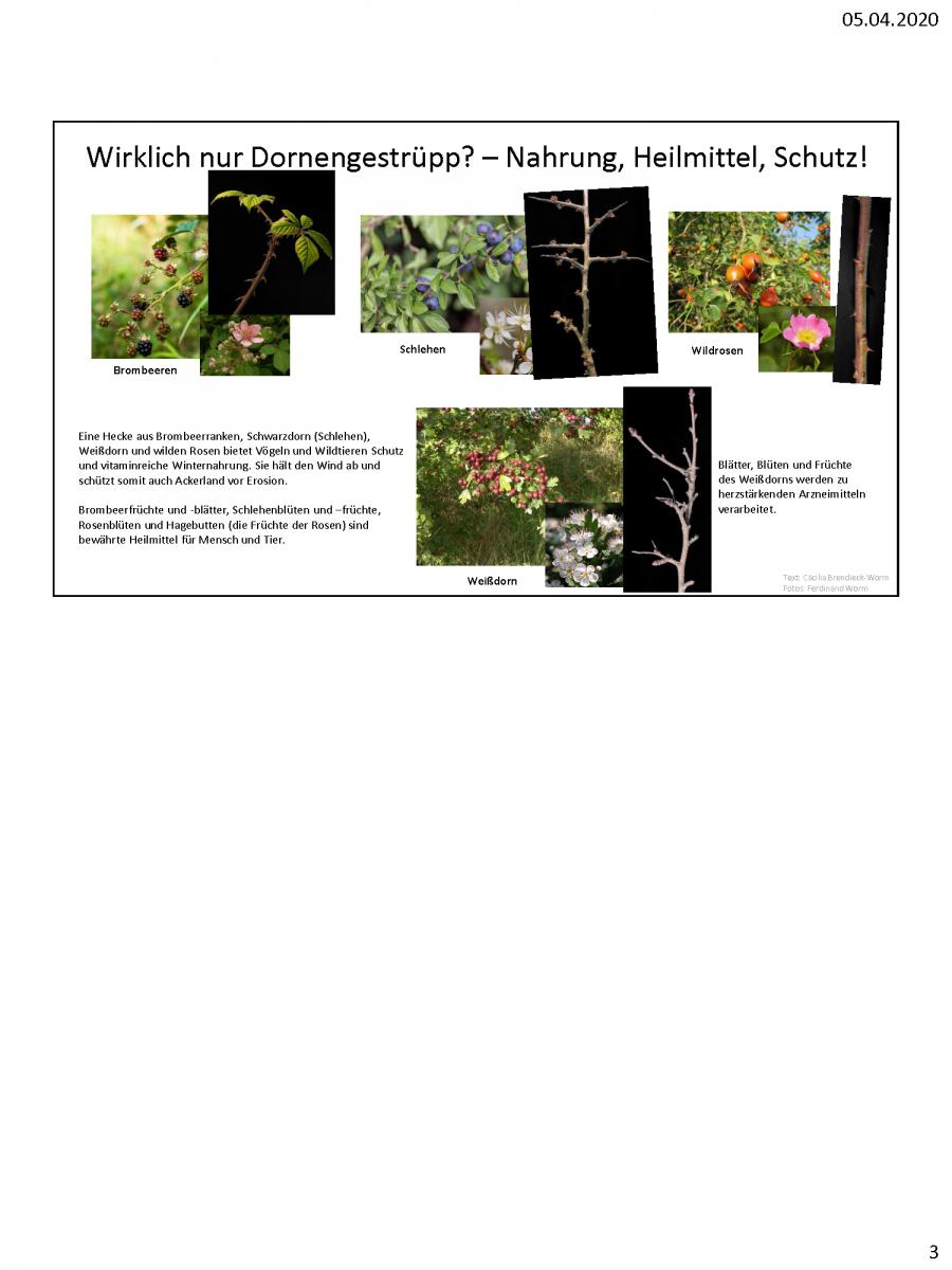 Beispiele-Schautafeln-Morbacher-Kräuterlehrpfad_Seite_3