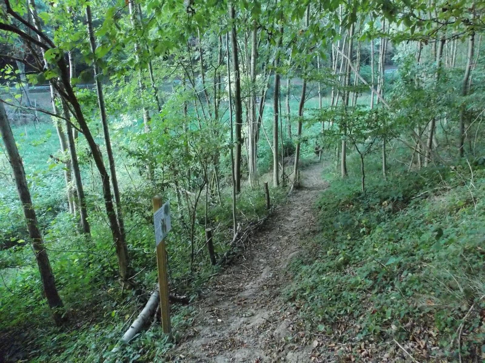 48-Zugang-Naturwiese